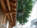 2006日本福岡東京之旅 2006.08.17