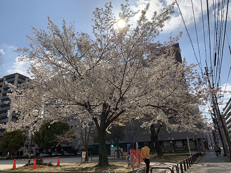 [遊記] 2019日本福岡廣島行 – Day 4 . 2019.03.24