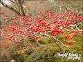 2011日本京都之旅, 2011.12.22