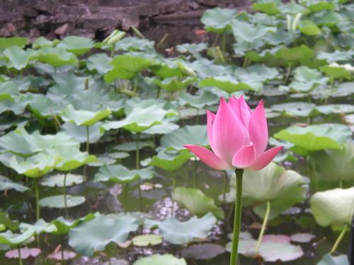 [生活] 我在蘇州 – 拙政園